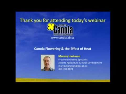 Canola Flowering and the Effect of Heat
