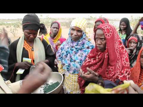 La Spiruline au Tchad