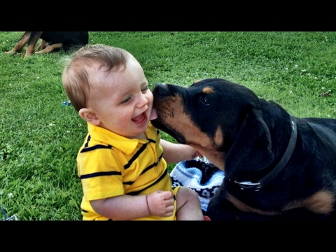Rottweiler Love Baby Compilation NEW