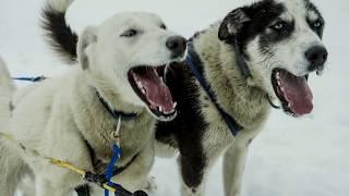Die 10 aggressivsten Hunde, die du meiden solltest