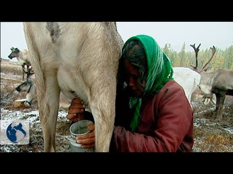 Nomadic tribes of Mongolia. Part 2