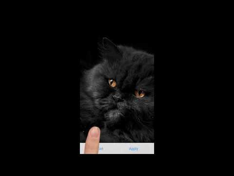 Cute Black Cats , Water Touch Live Wallpaper , Aplikacije na