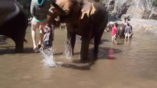Elephlying in Thailand