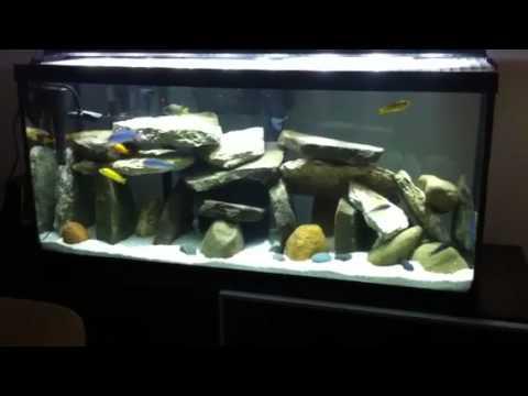 30 gallon cichlid tank  YouTube