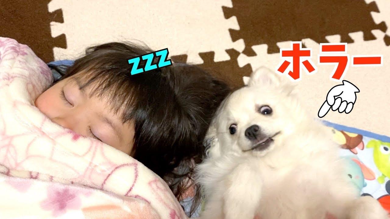 子犬と一緒に寝よう♡妖怪みたいな子犬wぽこあぽこ