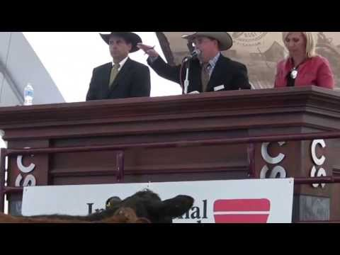 International Livestock Auctioneer Championship Final - Calgary Stampede 2013