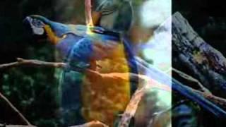 YouTube - -Nasheed - Allahu - BEST ISLAMIC SONG--.3gp