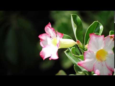 ครูแสง : เรียนลัดถ่ายภาพ 10 ถ่ายภาพดอกไม้ไทย-Thai Flowers Movie 4