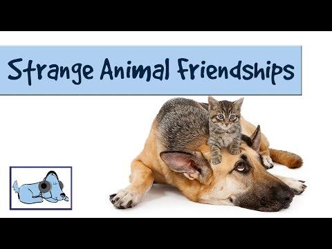 bizarre-bffs---collection-of-strange-animal-friendships!-cute-photos!