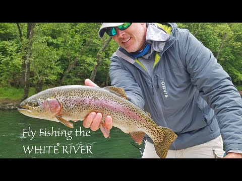 Fly Fishing The WHITE RIVER In Arkansas For MONSTER TROUT!
