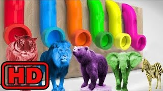 Kid -Kids -Learn Colors With Animal Balls Elephant,Lion ZOO Wild Animals/Surprise Eggs Nursery Rhym
