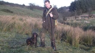 Gundog Training - Steadiness