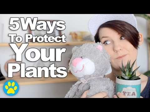 keeping-plants-safe-from-cats-(&-vice-versa!)