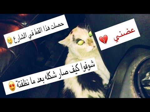 كيف تتعامل مع القطط الجديده ( حصلته بالشارع وقررت اخذه معي 😻) مره اليف ❤️ / Mohamed Vlog