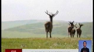 Исчезнувших на территории Казахстана животных внесут в Красную книгу