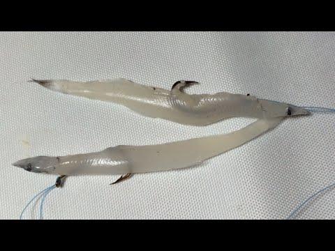Fishing - How to tie Dropper Loop Knot and Hook fish- Fishing Tips -Thẻo câu nước sâu