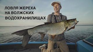 Трофейный жерех на Волгоградском водохранилище