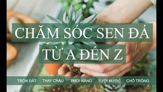 Hướng dẫn chăm sóc sęn đá từ A đến Z kнi mới mขa về | www.vuonsenda.vn