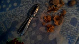 Сорт ореха Буковинская бомба
