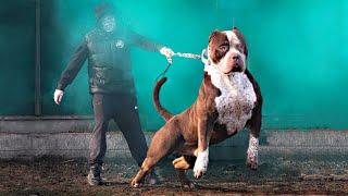 These 10 Dog Breeds Look Like Pitbulls