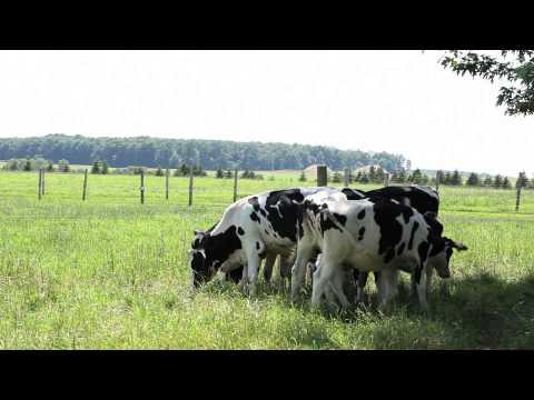 Three Times A Day, Organic Meadow