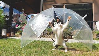 비가 내리면 기분이 너무 좋아지는 고양이 본 적 있나요…
