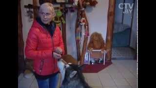 CTV.BY: Людмила и Михаил Захаренко создали гостиницу для животных