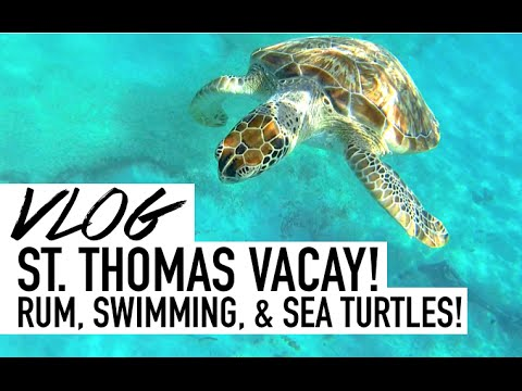 Rum + Sea Turtles + St Thomas = BEST VACATION EVER!
