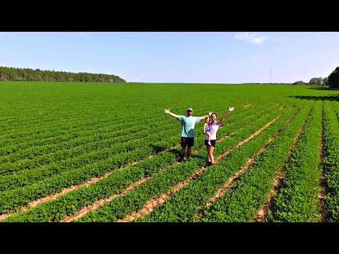 We Bought An 80 Acre Farm! (Building Our Dream Lake)