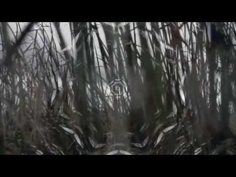 Mystique - Daniel Kobialka