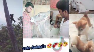 Cute animals latest Tiktok video's in Tamil