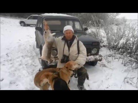 Охота на зайца с русскими гончими.  Белгородская обл., Россия