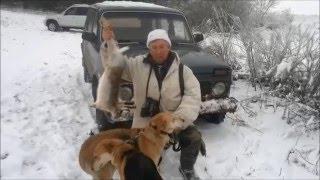 Охота на зайца в Белгородской области