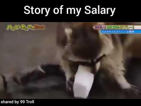 Story of my Salary - funny WhatsApp status