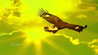Leo Rojas - El Condor Pasa ♥