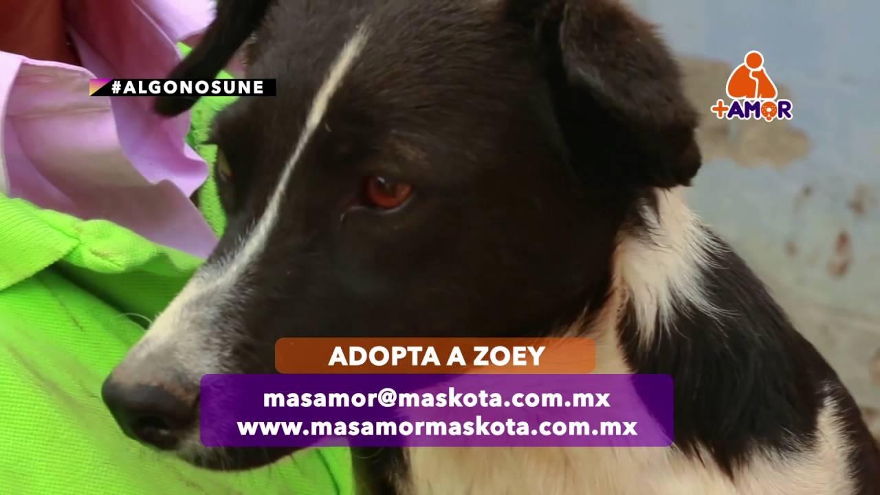 +KOTA presenta: Adopciones +AMOR / Zoey
