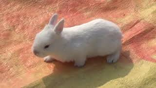Rabbit - A Funny And Cute Bunny
