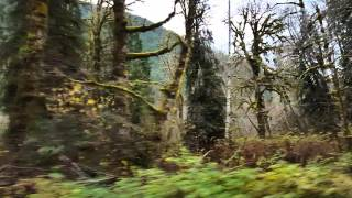 Driving along the Hamma Hamma river in Washington