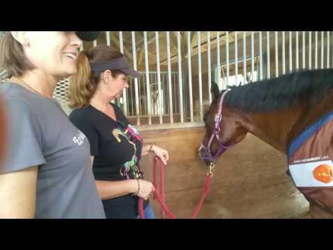 BEMER Veterinary Unit: Reba