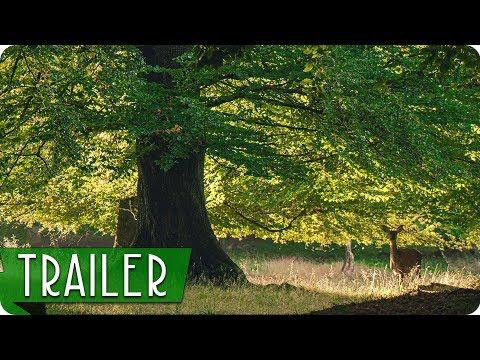Das Geheime Leben Der Baume Trailer German Deutsch 2020 Youtube