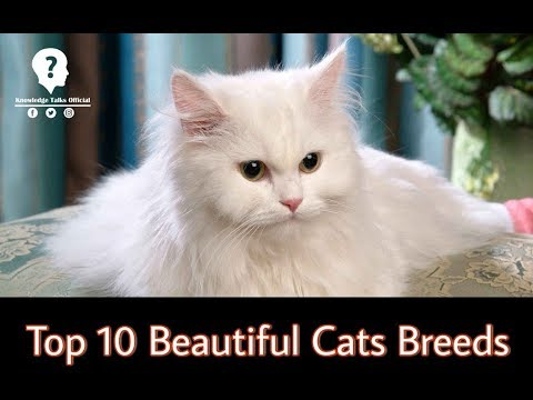 Top 10 beautiful Cats Breeds