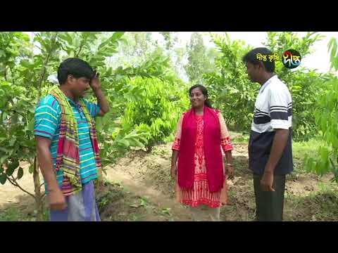 Deepto Krishi/দীপ্ত কৃষি -পেয়ারা চাষ /পঞ্চগড়, পর্ব ৩৩১