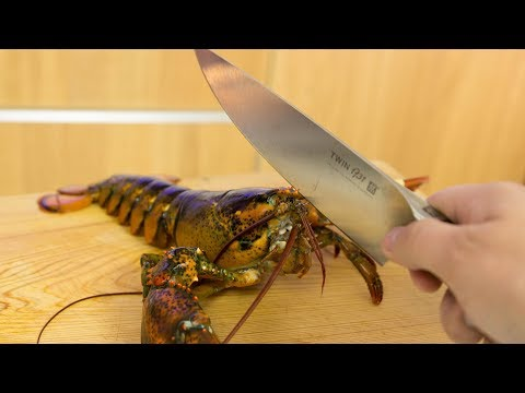 extremely-graphic:-live-lobster-sushi-roll