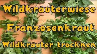 Wildkräuterwiese, Franzosenkraut und Wildkräuter trocknen