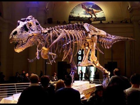 Revolutionary overhaul of dinosaur family tree proposed