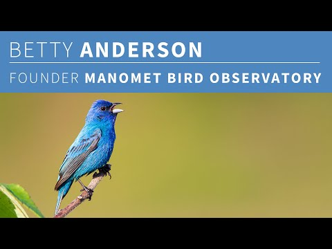 Betty Anderson, Founder Of Manomet Bird Observatory