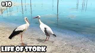Ultimate Bird Simulator - Life of Stork - Android/iOS - Gameplay Part 10