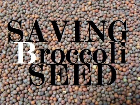 Save Broccoli And Other Brica Family