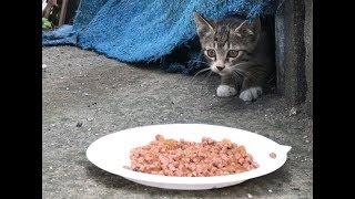 심장을 부여잡고 봐야되는 고양이 영상(4k)