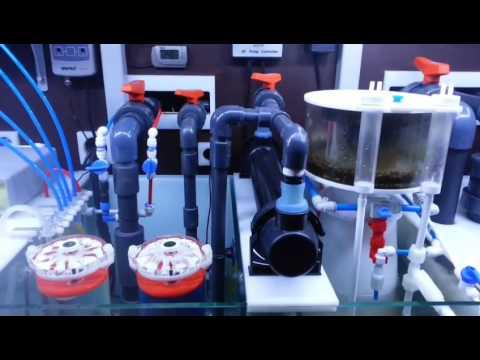 Presentaci n canal explicaci n montaje instalaci n - Montaje de acuarios ...